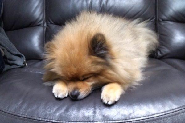 勉強が苦手な人ほど役立つ睡眠学習法~インターリービング睡眠
