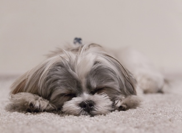 入眠の儀式に瞑想を取り入れるべき理由