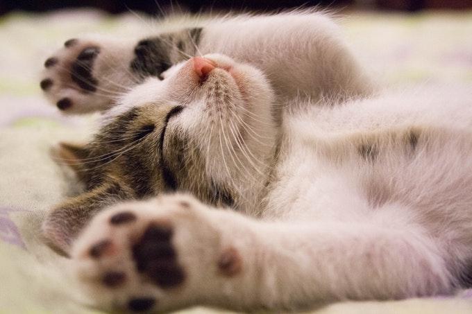 うっかり見逃しやすい睡眠障害の原因